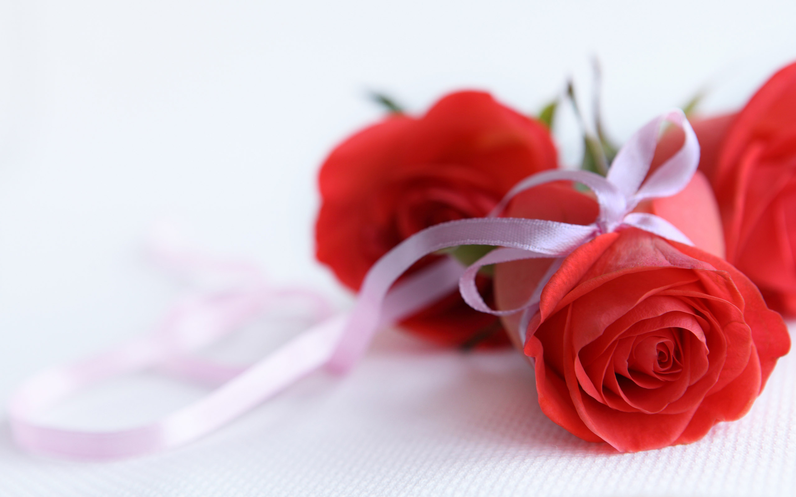 red rose wedding gift flower whatsapp images free downlod
