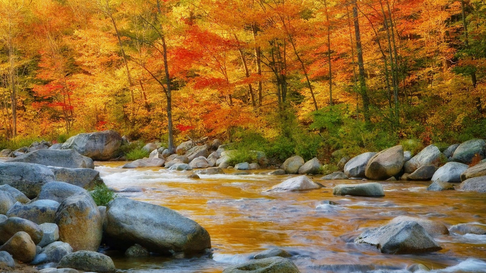 autumn picture wallpaper download river with rocks photos download