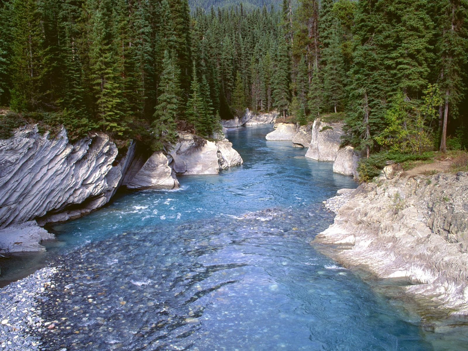heart breakable blue forest river pics images download