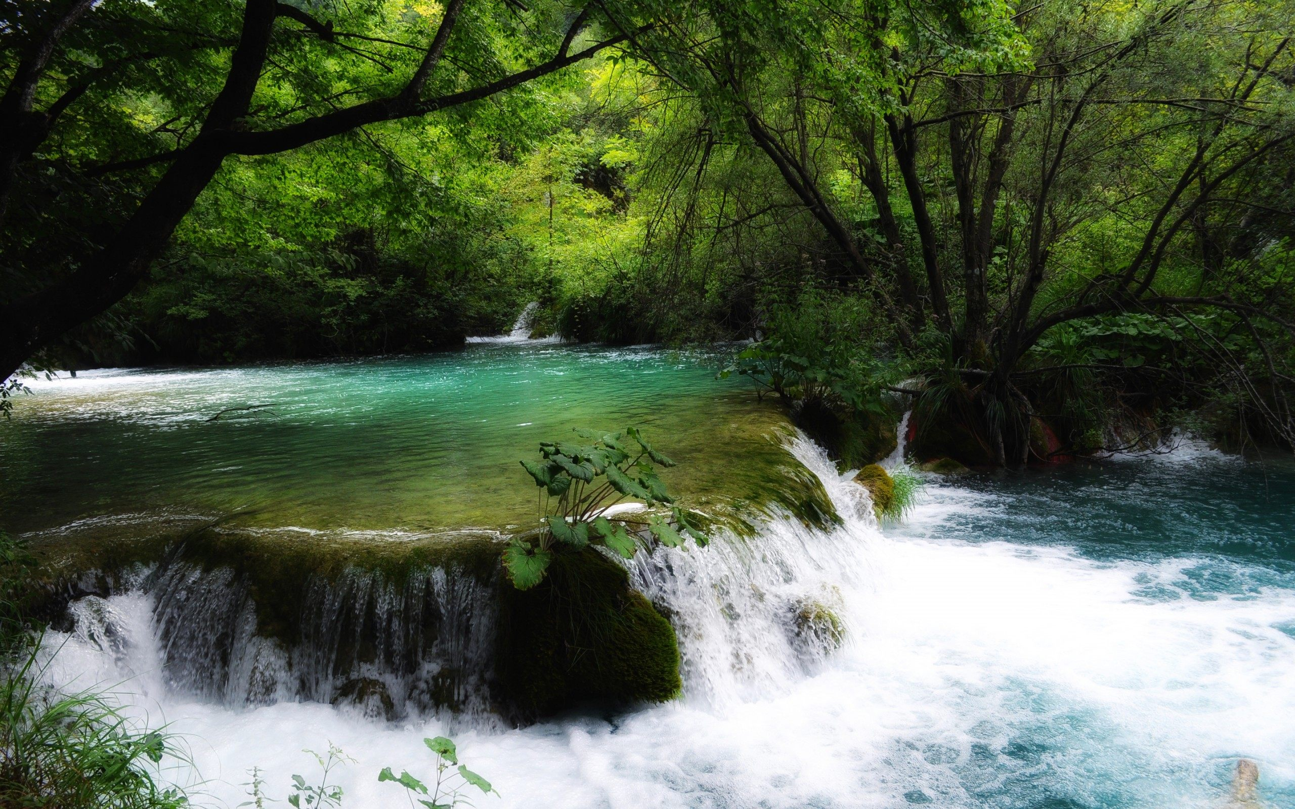 river stream beautiful nature wallpaper images picture download