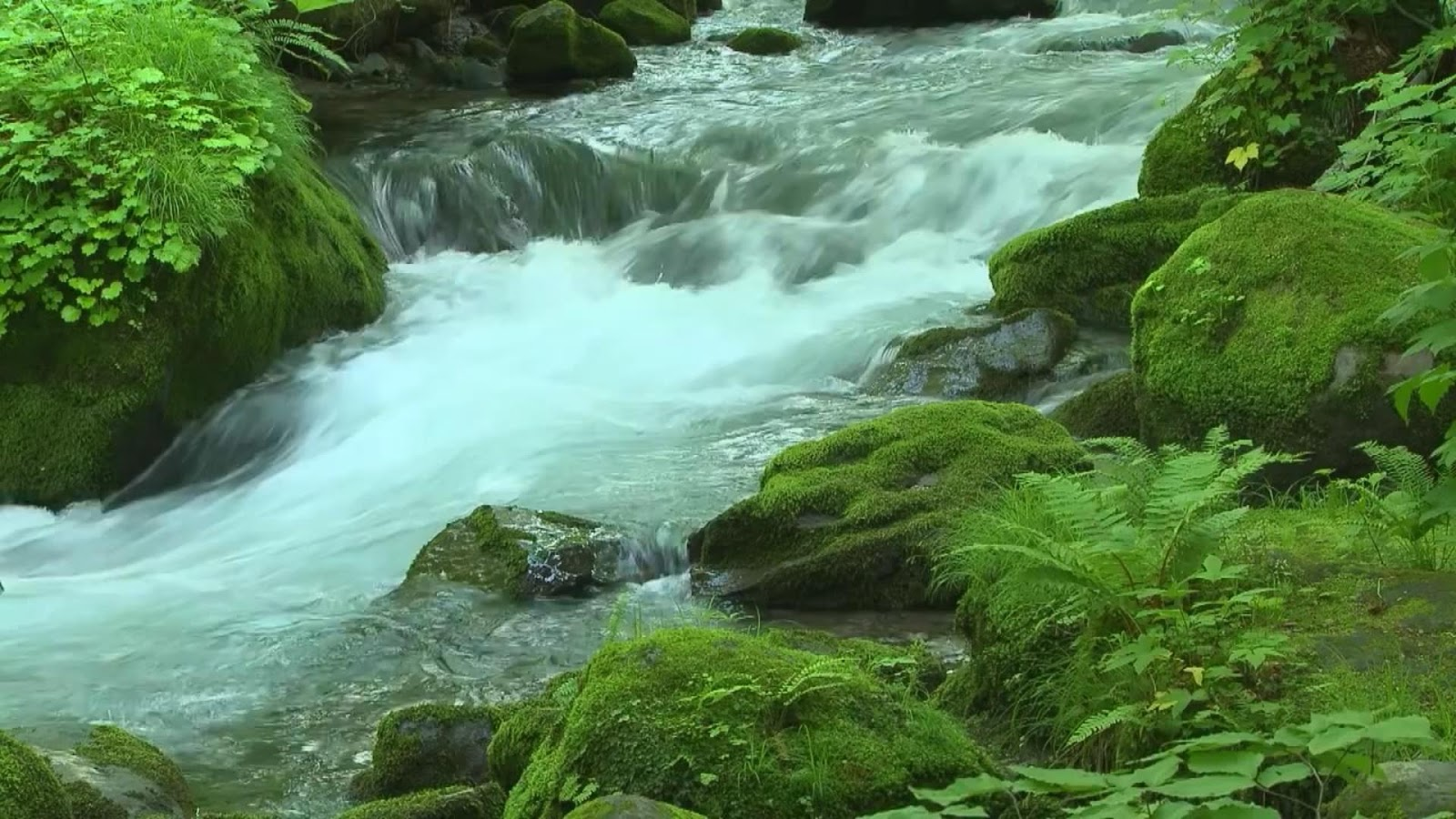 water flow  fresh river hd wallpapers images picture