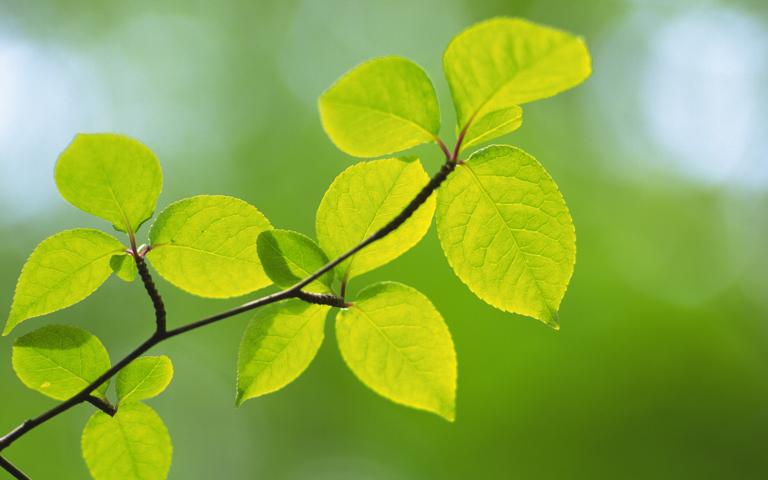 green leaves amazing free download hd desktop background pictures