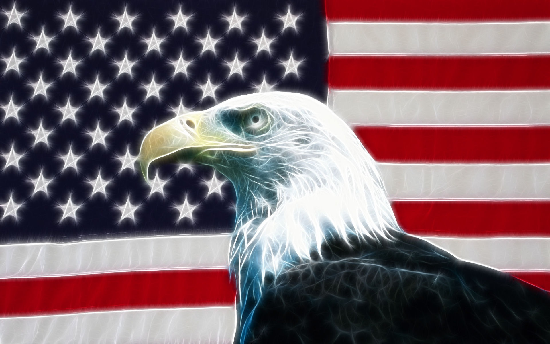 american bald eagle wallpaper 012
