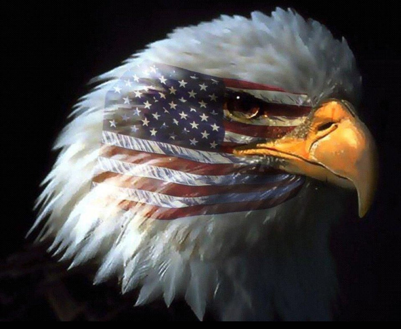 american bald eagle wallpaper 015