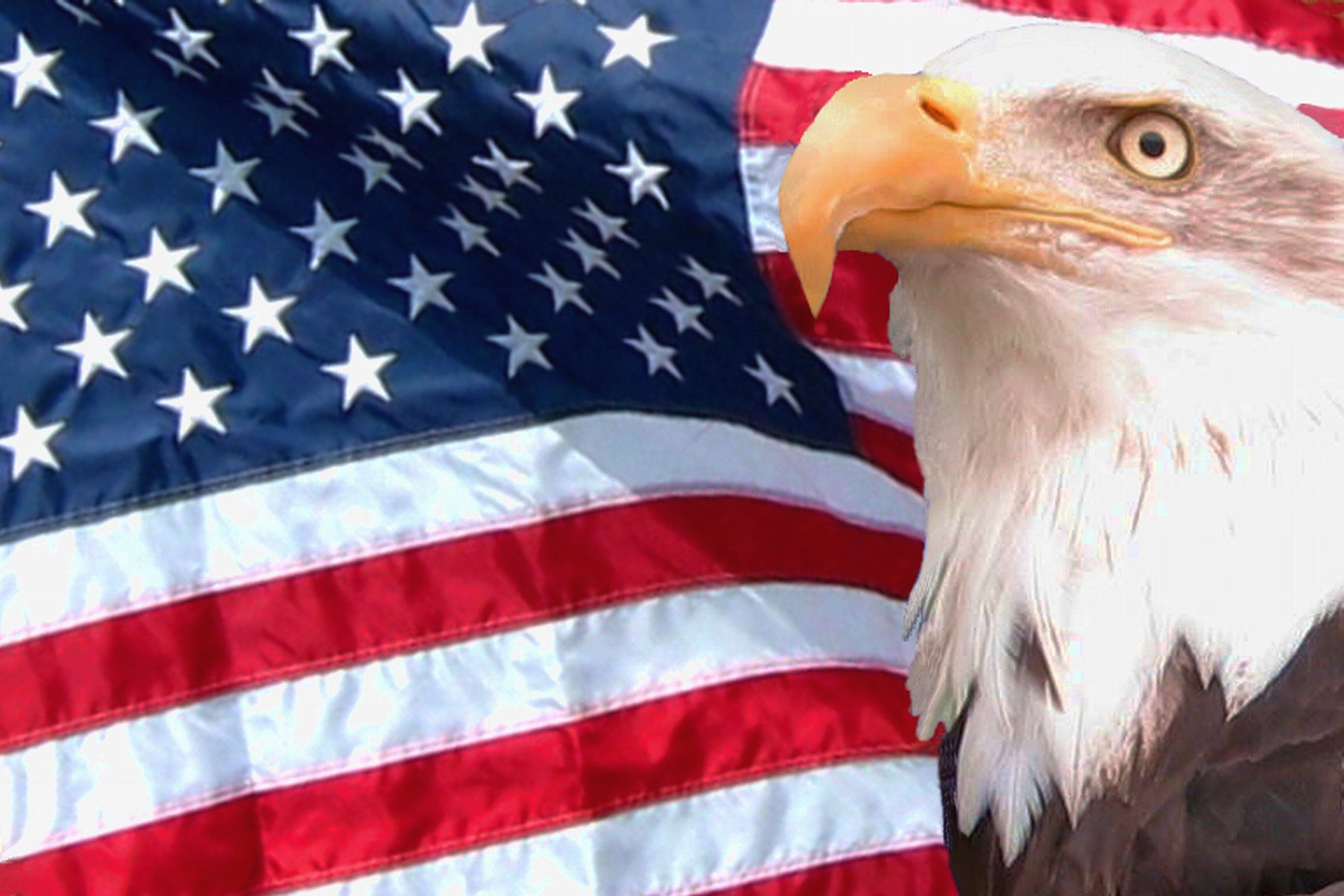 desktop pictures american eagle with flags