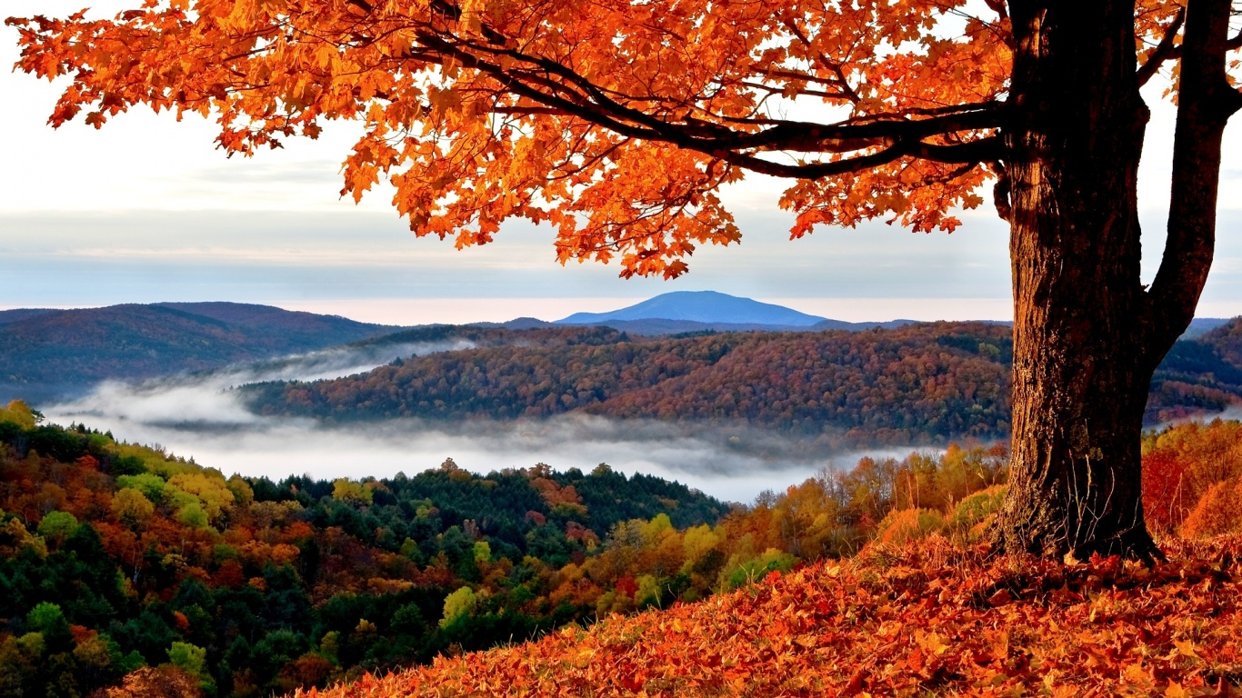 Autumn Atmosphere Image And Hd Wallpaper Download Image