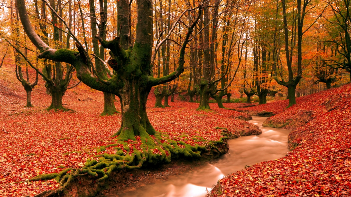 awesome and stuuning out picture of autumn hd wallpapers download