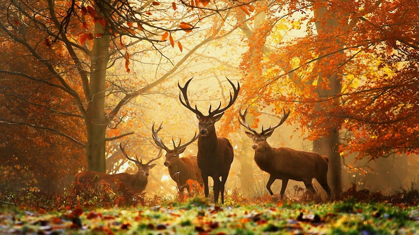 deers jumping and enjoying in the forest autumn photos