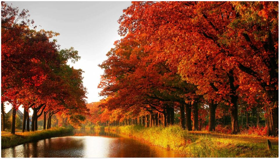 free autumn red collon maple river widescreen wallpaper