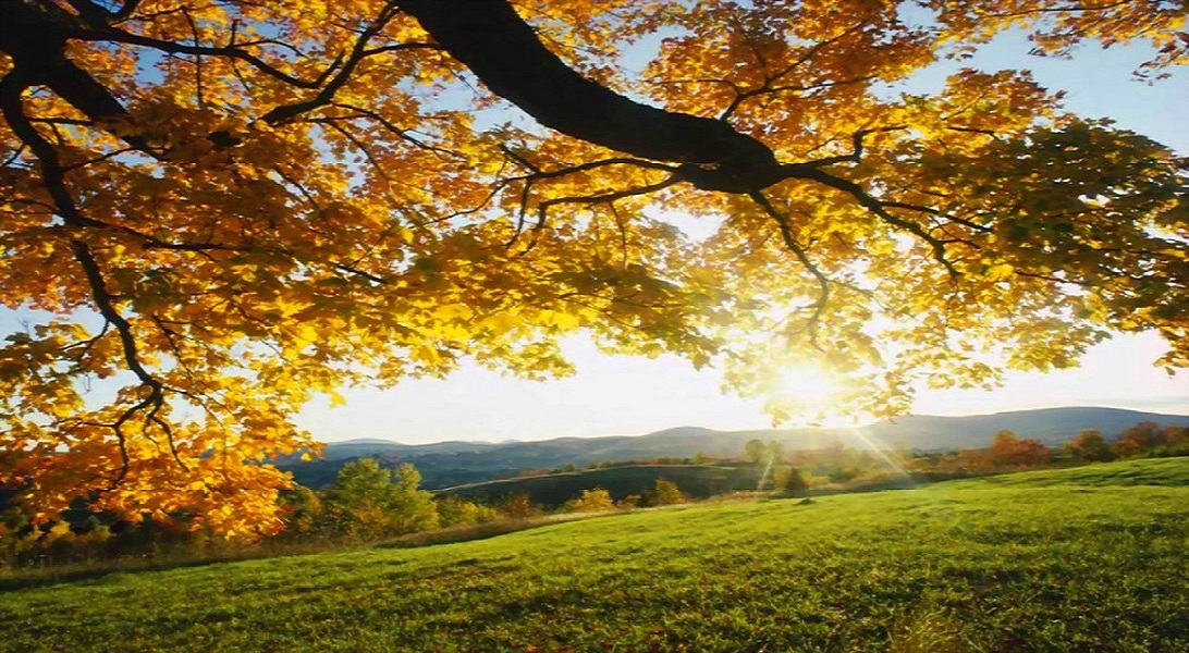 green grass and yellow leaves autumn wallpaper widescreen