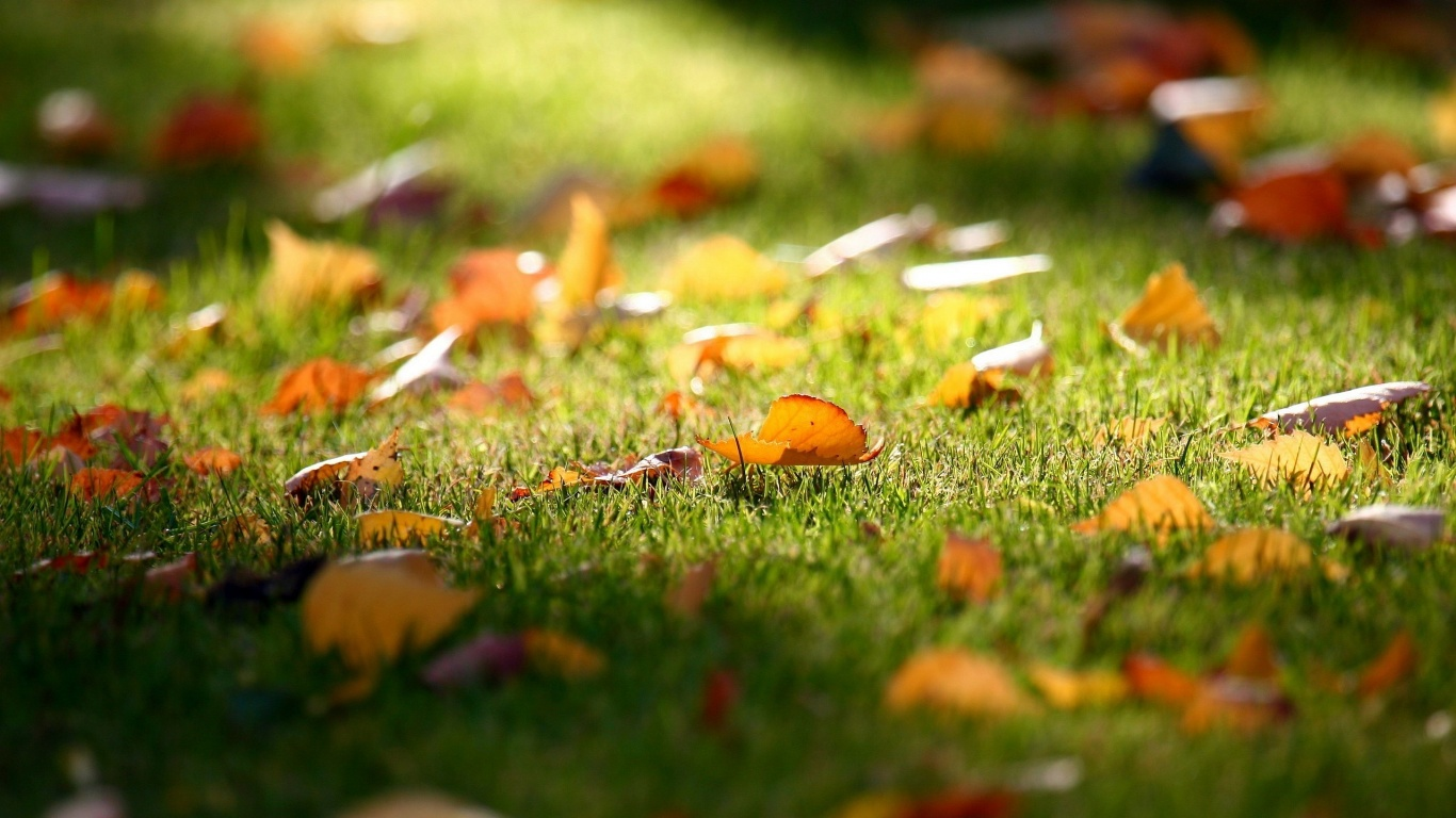 Leaves Fall In Green Grass Pic Free Download Image
