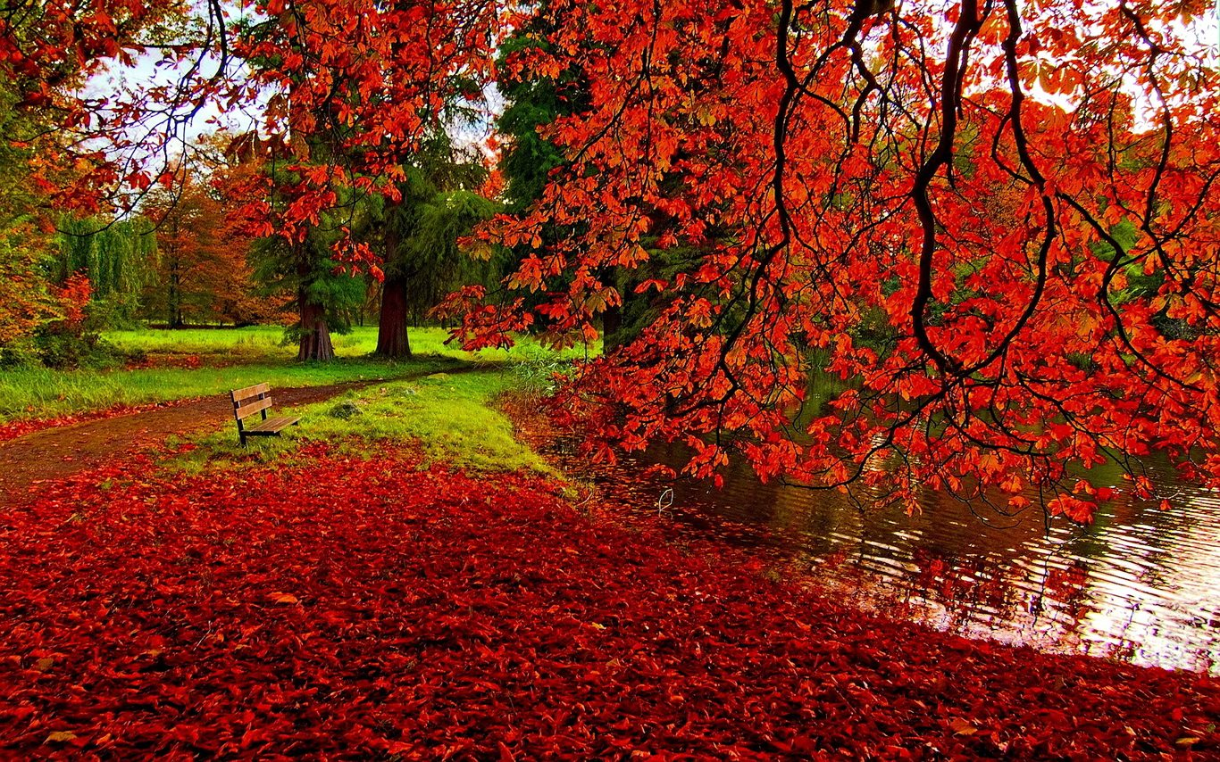 red leaves autumn park hd wallpaper image