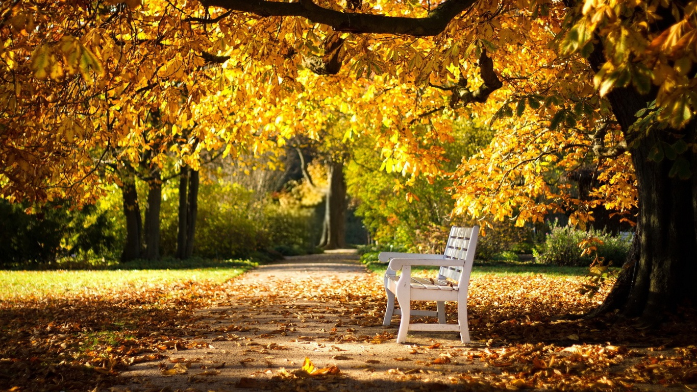Rest Of Mind In Autumn Place Wallpaer Image