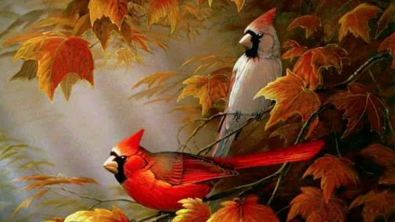 Stunning Brids Up The Tree Hd Wallpaper Image Free Download