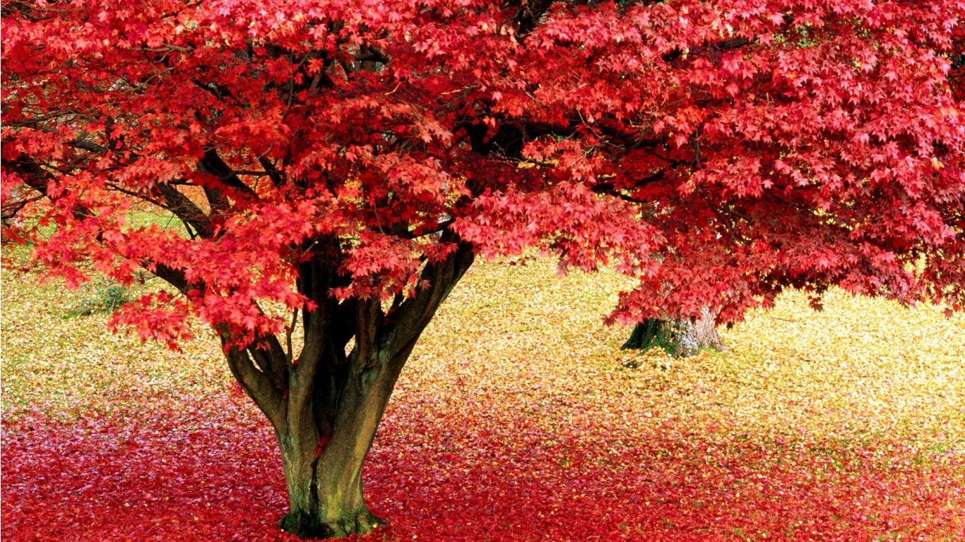 wonderful forest pink maple tree pic download