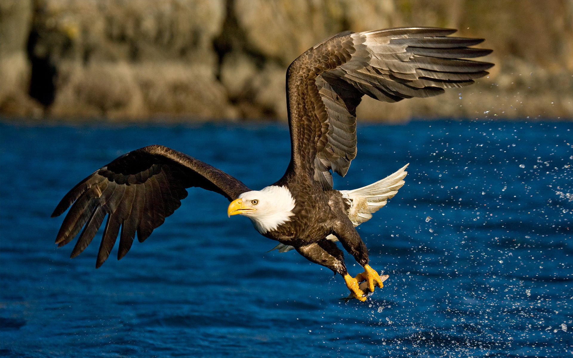 bald eagle wallpaper hd 002
