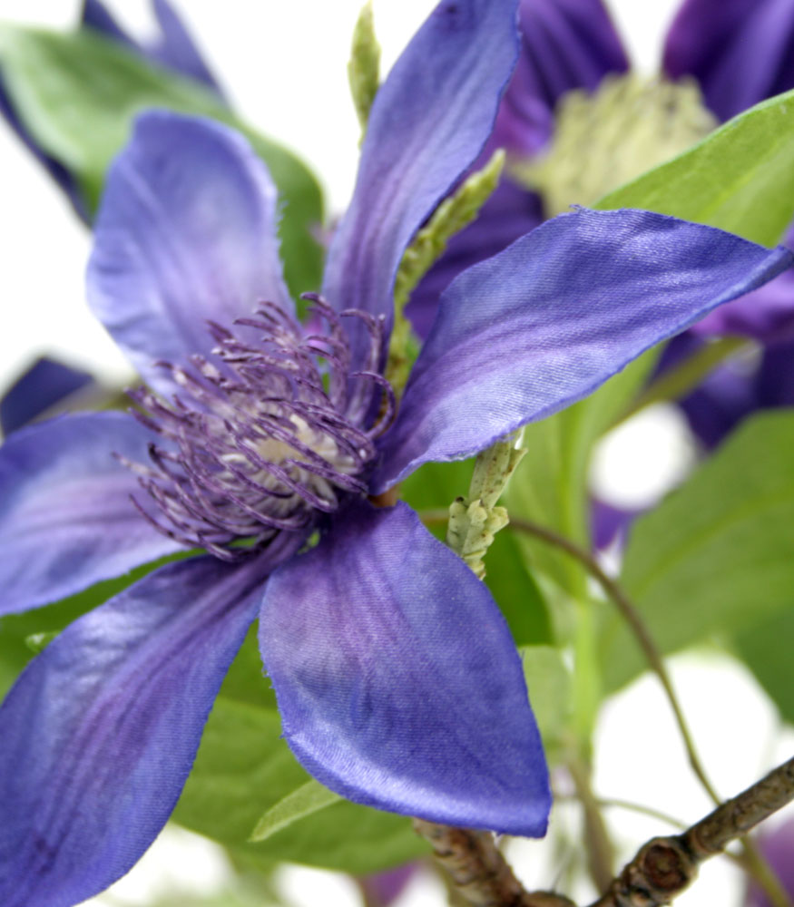 artificial flowers clematis purple nice desktop wallpaper