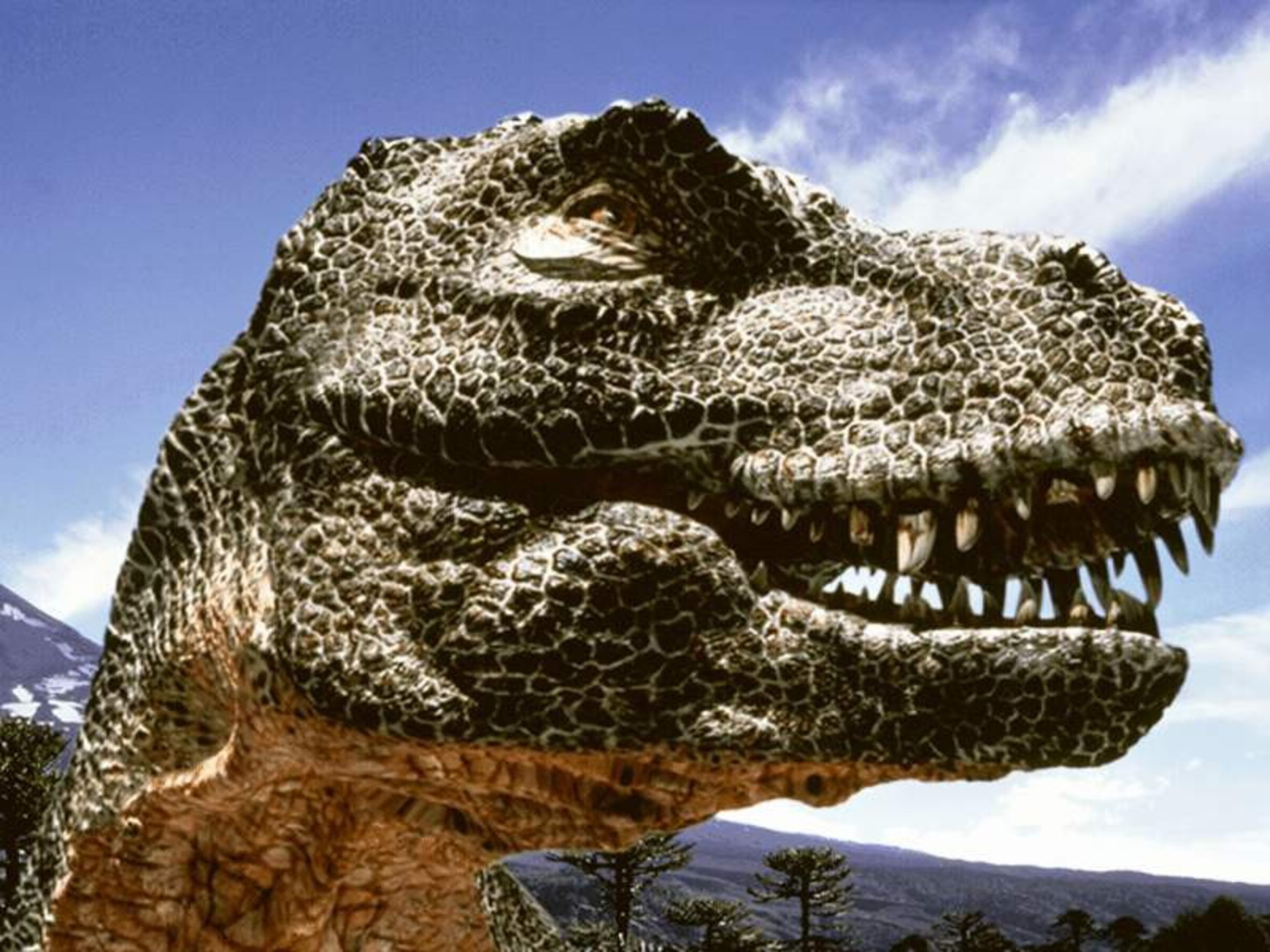 Face Of Dinosaur Closer View Hd Picture Download