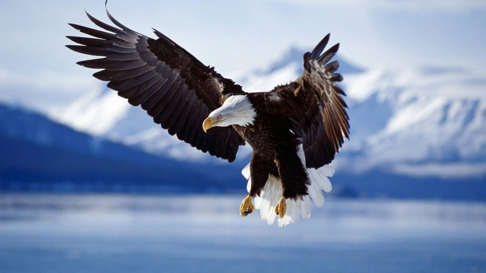 Cool Images Of Eagles Download
