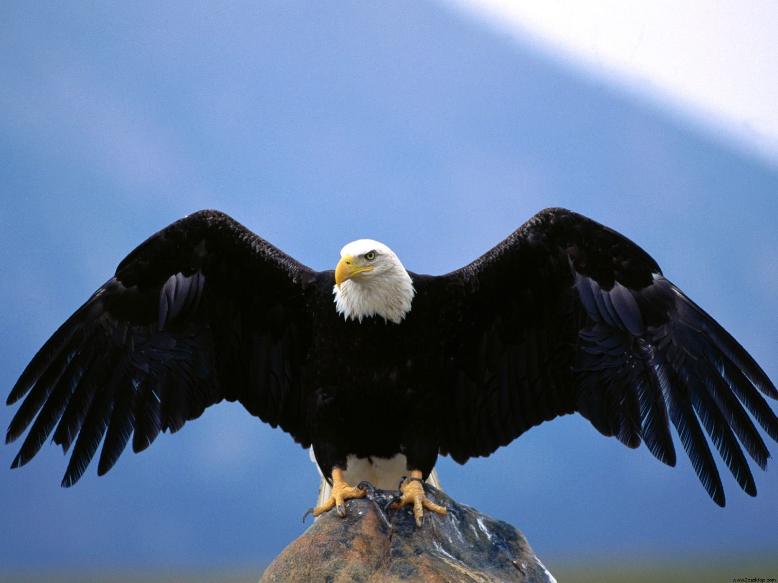hd usa eagle images