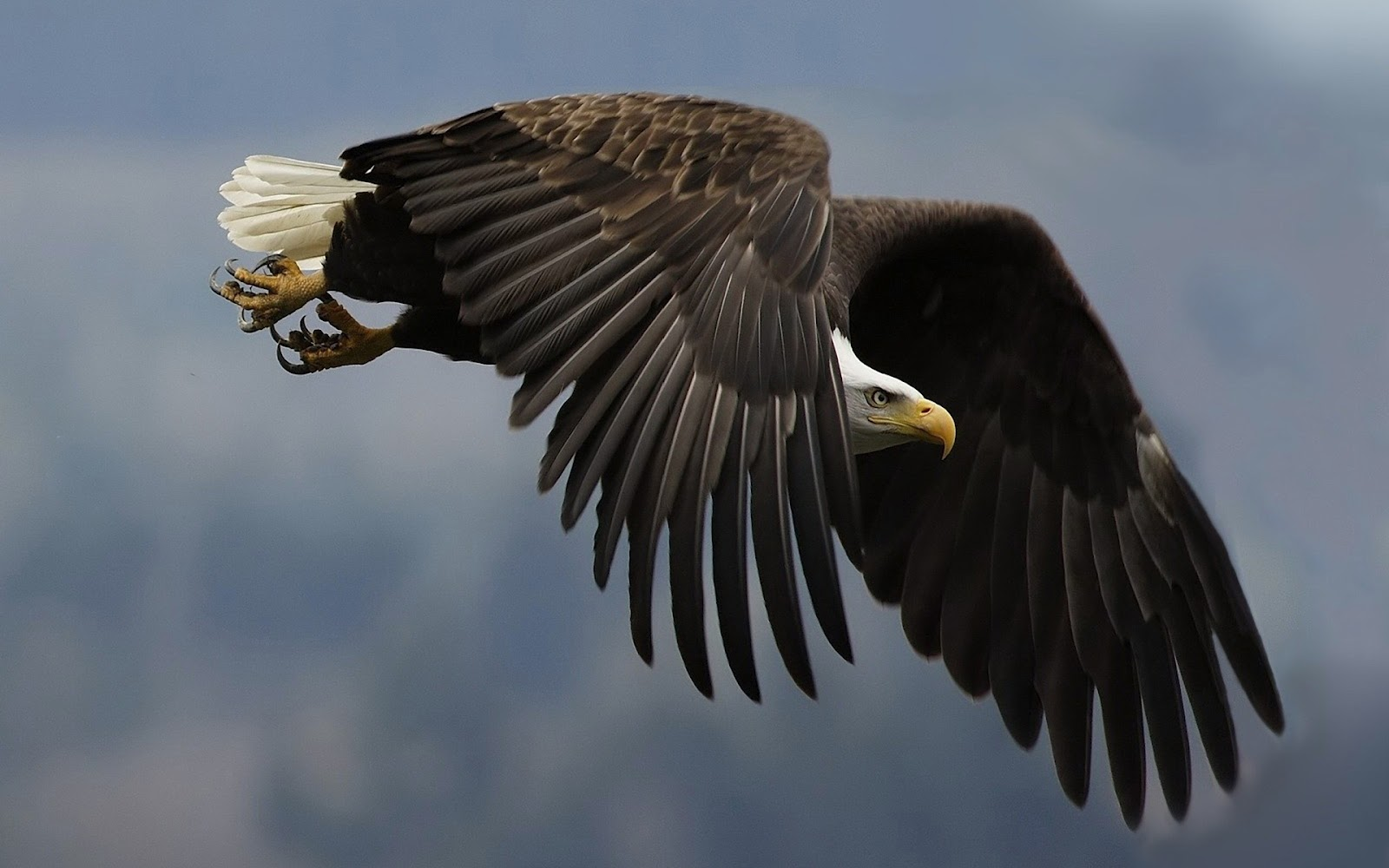 Images Of Eagle Wings