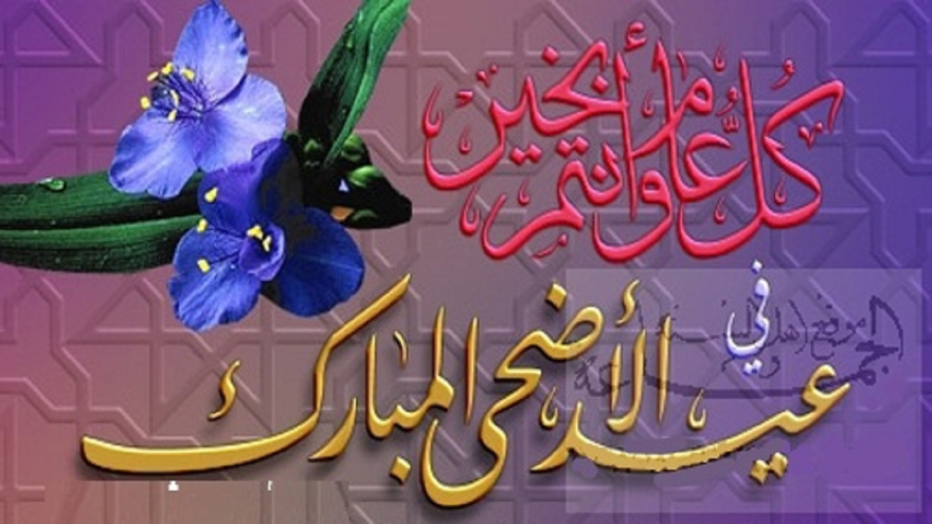 arabic eid ul adha wishes hd mobile desktop free images