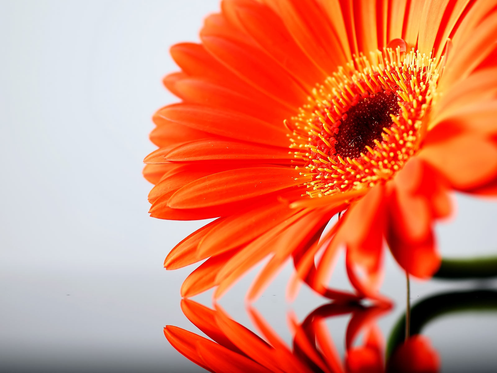 orange sunflower sunrise desktop pictures free download