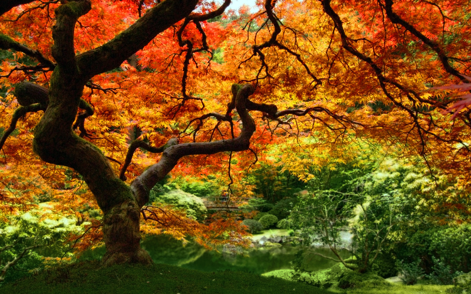 autumn forest trees leaves wallpapers images picture photos