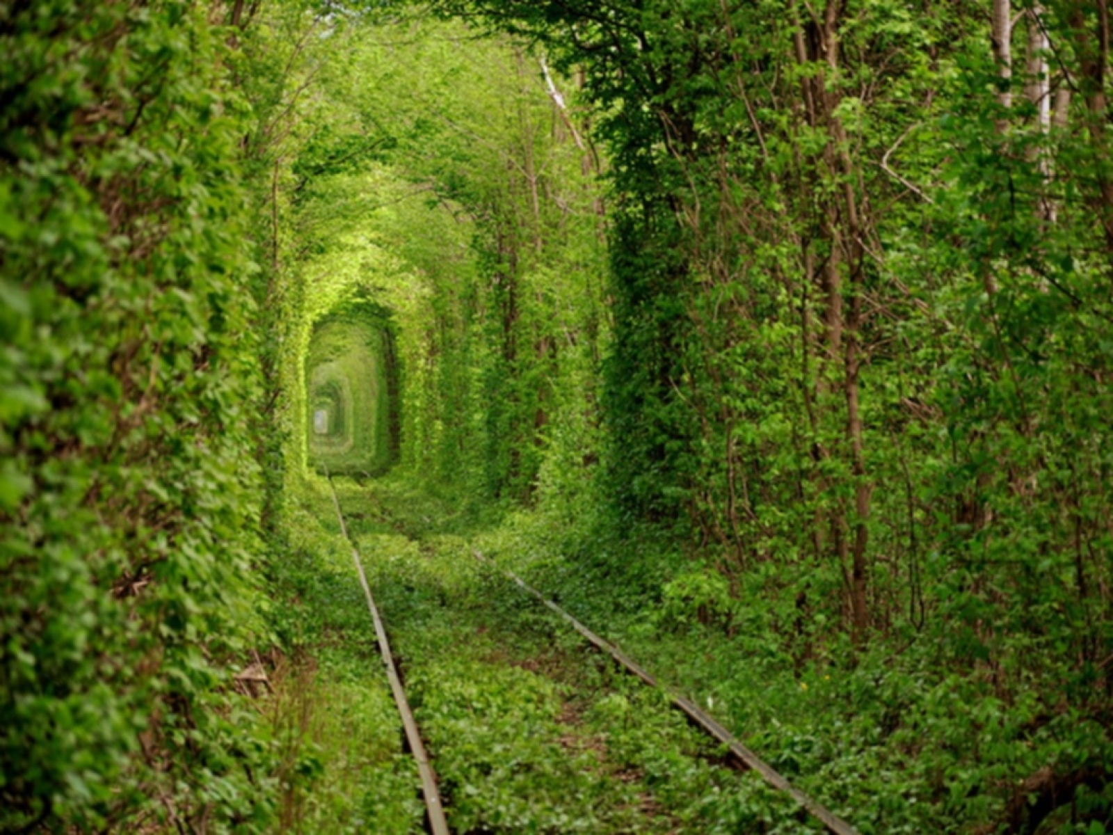 Beautiful Way Of Forest Green Green Train Tunnel Wallpaper Images Download