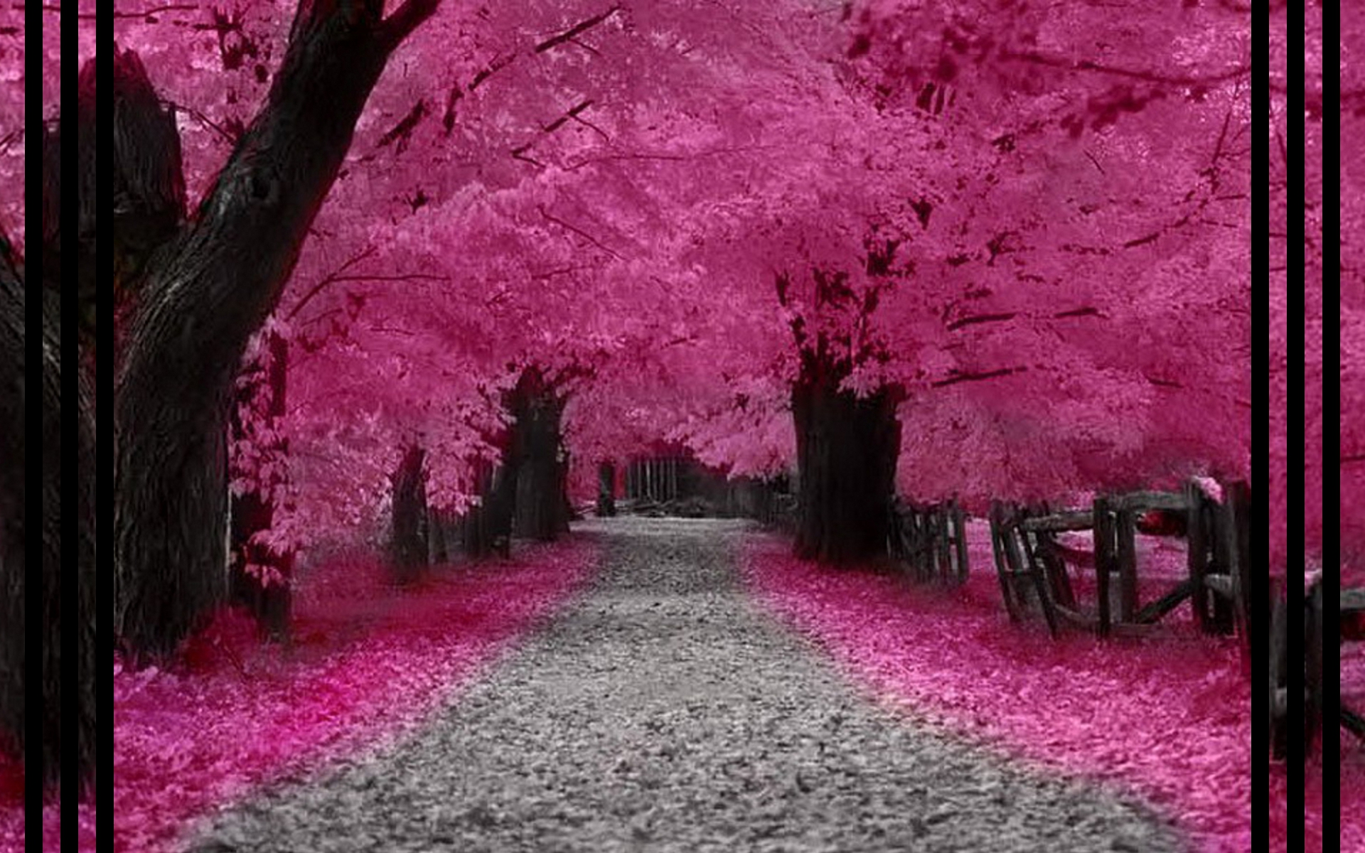 blossom forest fantasy images wallpaper images picture download