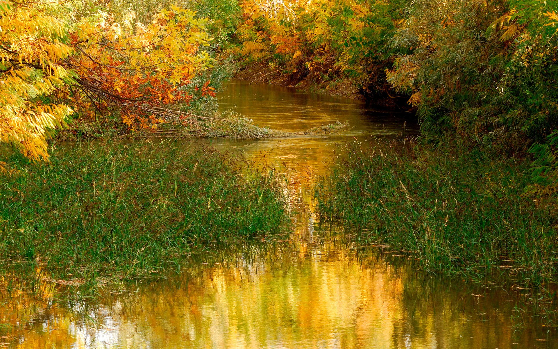 Forest Autumn River Images Picture Wallpaper Download