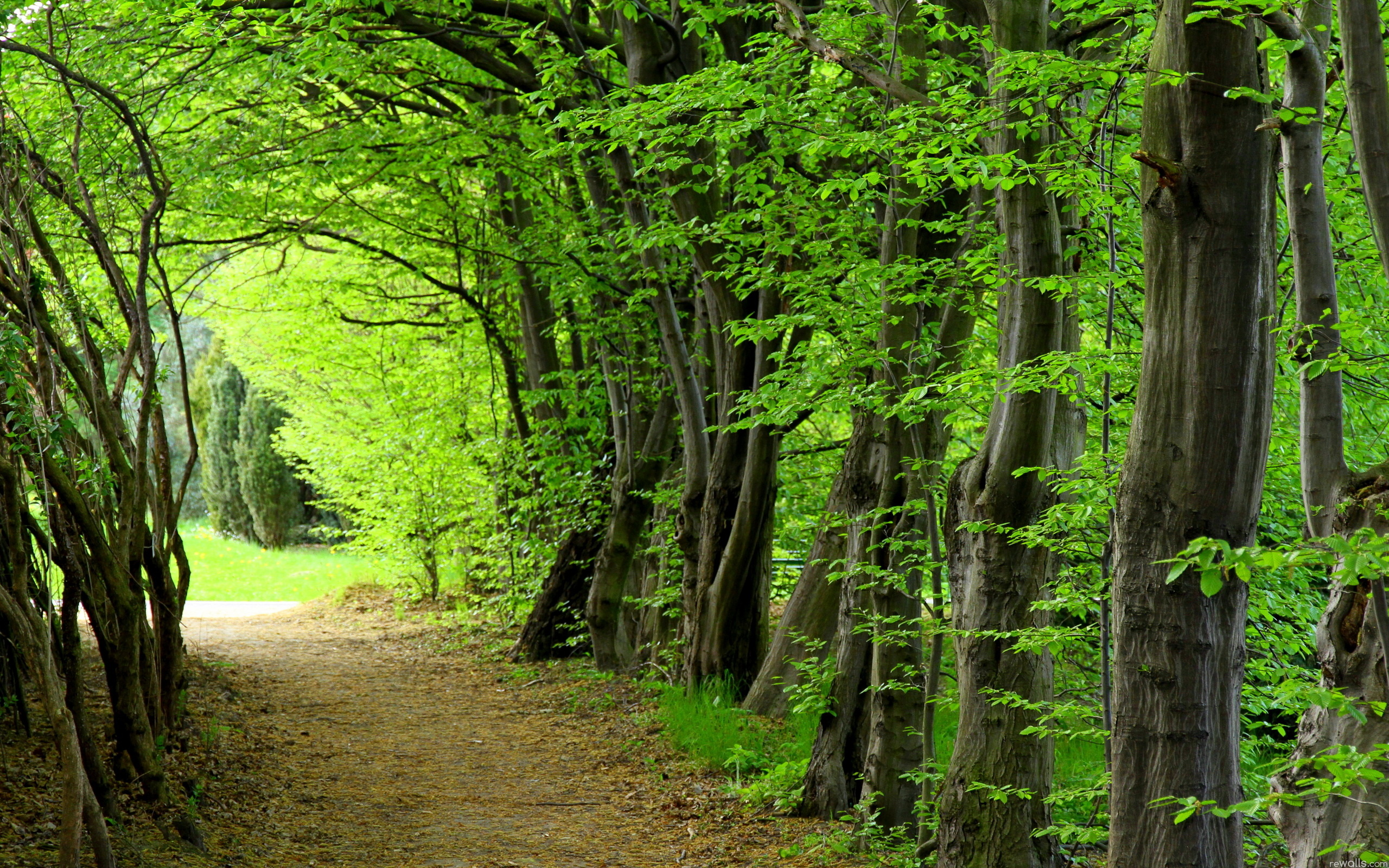 forest wallpaper trees nature desktop hd wallpapers backgroundz a·