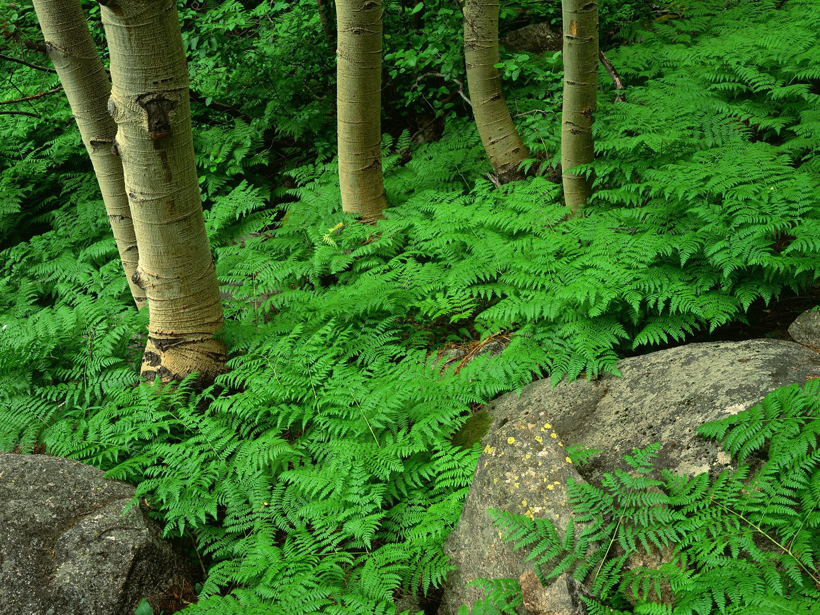 green forest images wallpaper photos picture mobile download