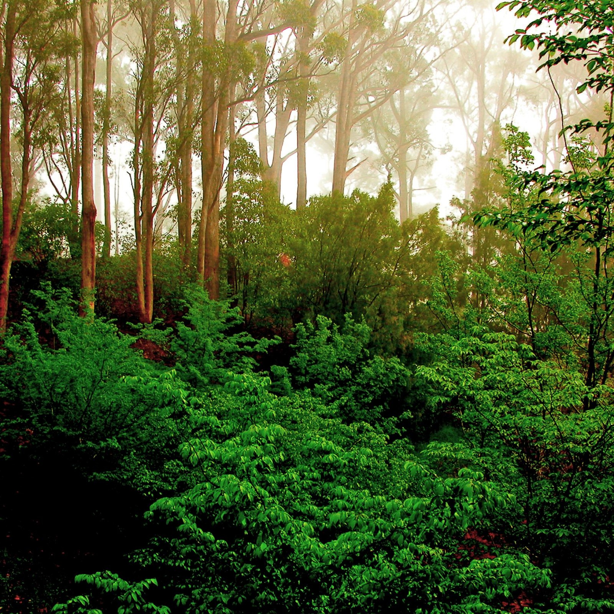 Green Forest Trees Images Picture Photos Wa Paper Download