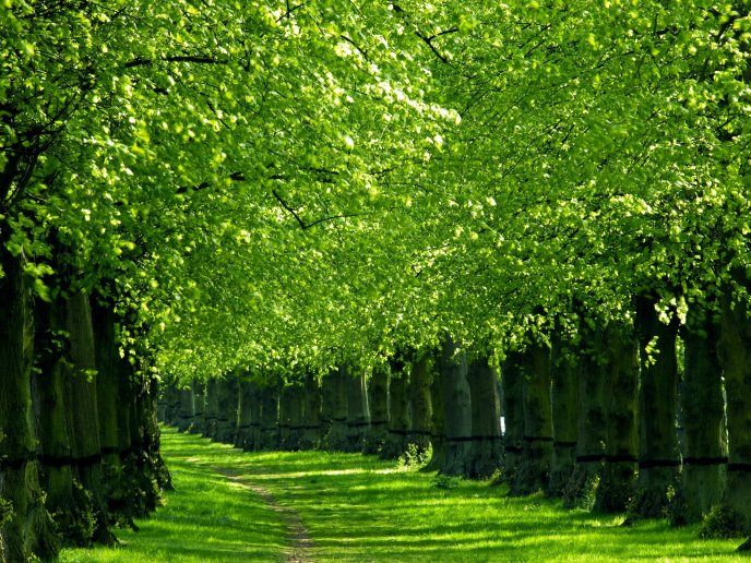 green nature trees lining the trail greeninsh picture images download mobile views