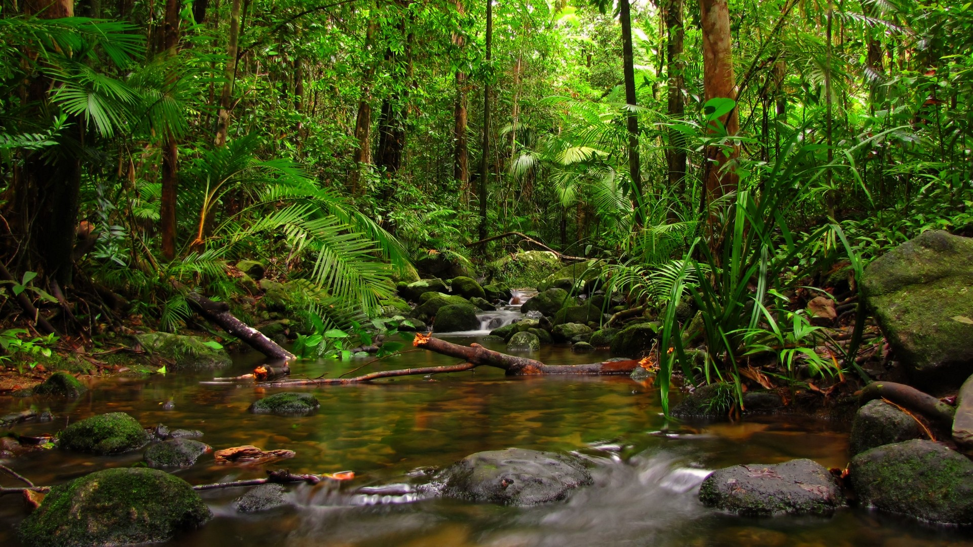 images from river jungle forest nature hd picture download