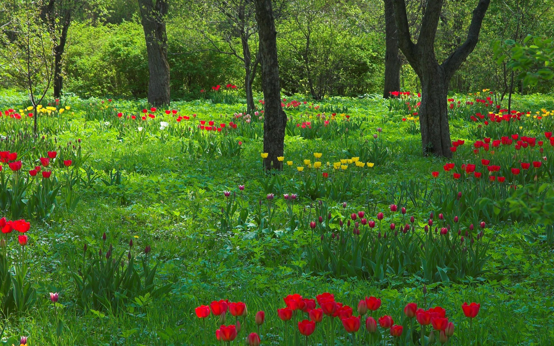 most popular cartoon forest flowers free download images wallpaper