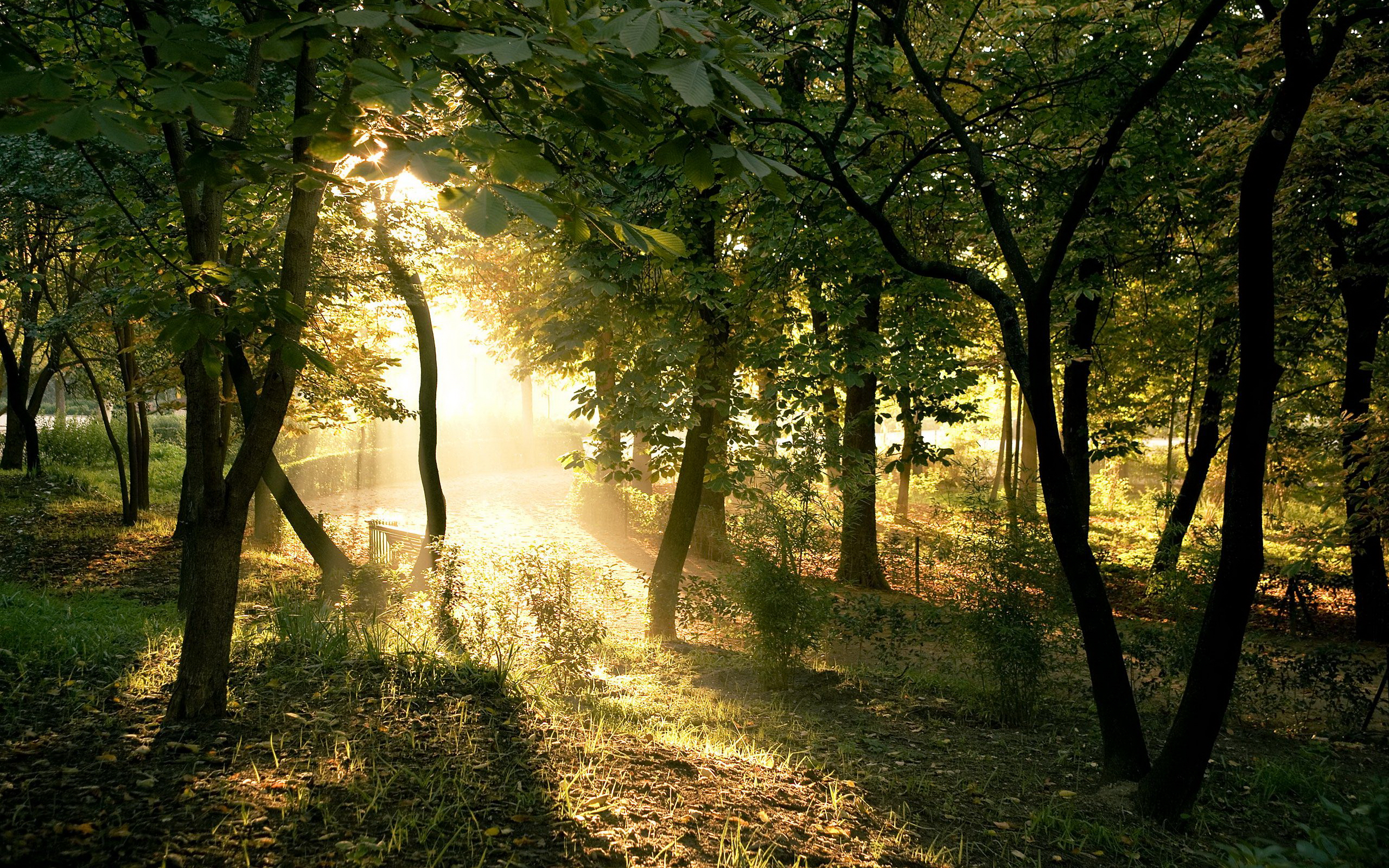 summer forest images picture wallpaper download images