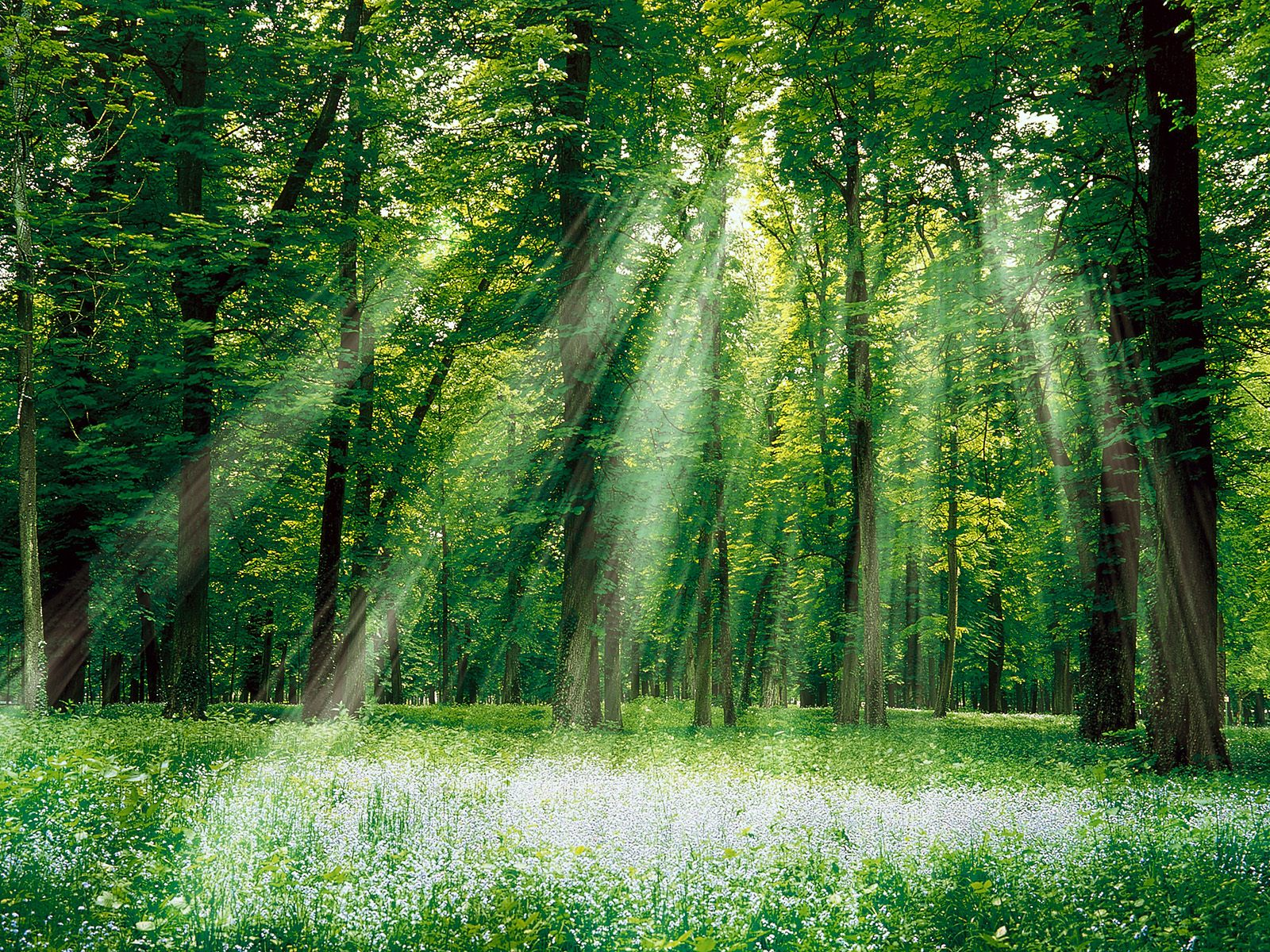 wonder magical forest images picture download wallpaper