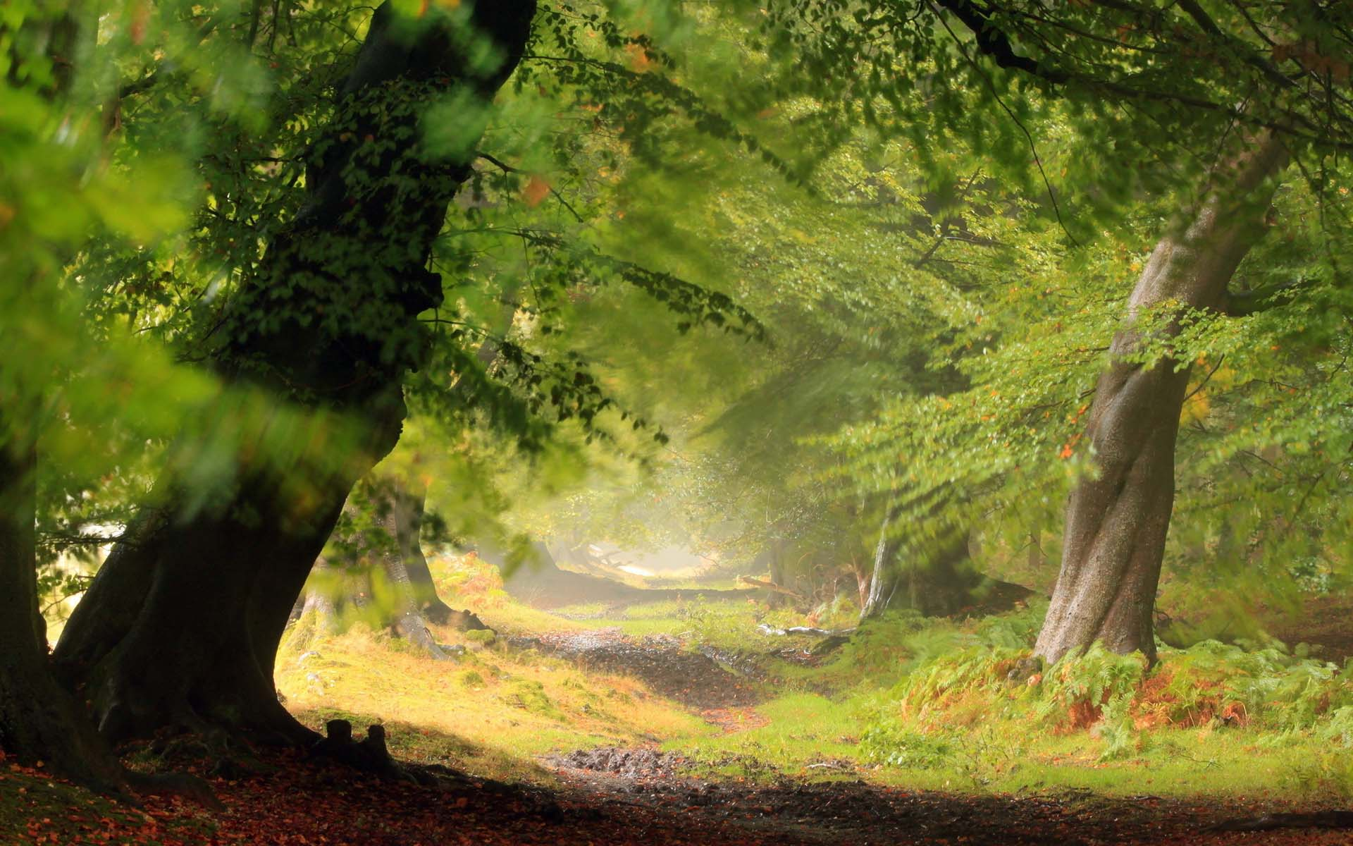 3d forest wallpaper images desktop free download
