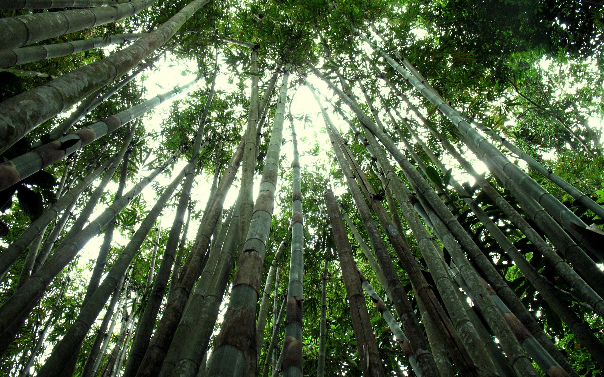 bamboo on forest images free wallpapers download