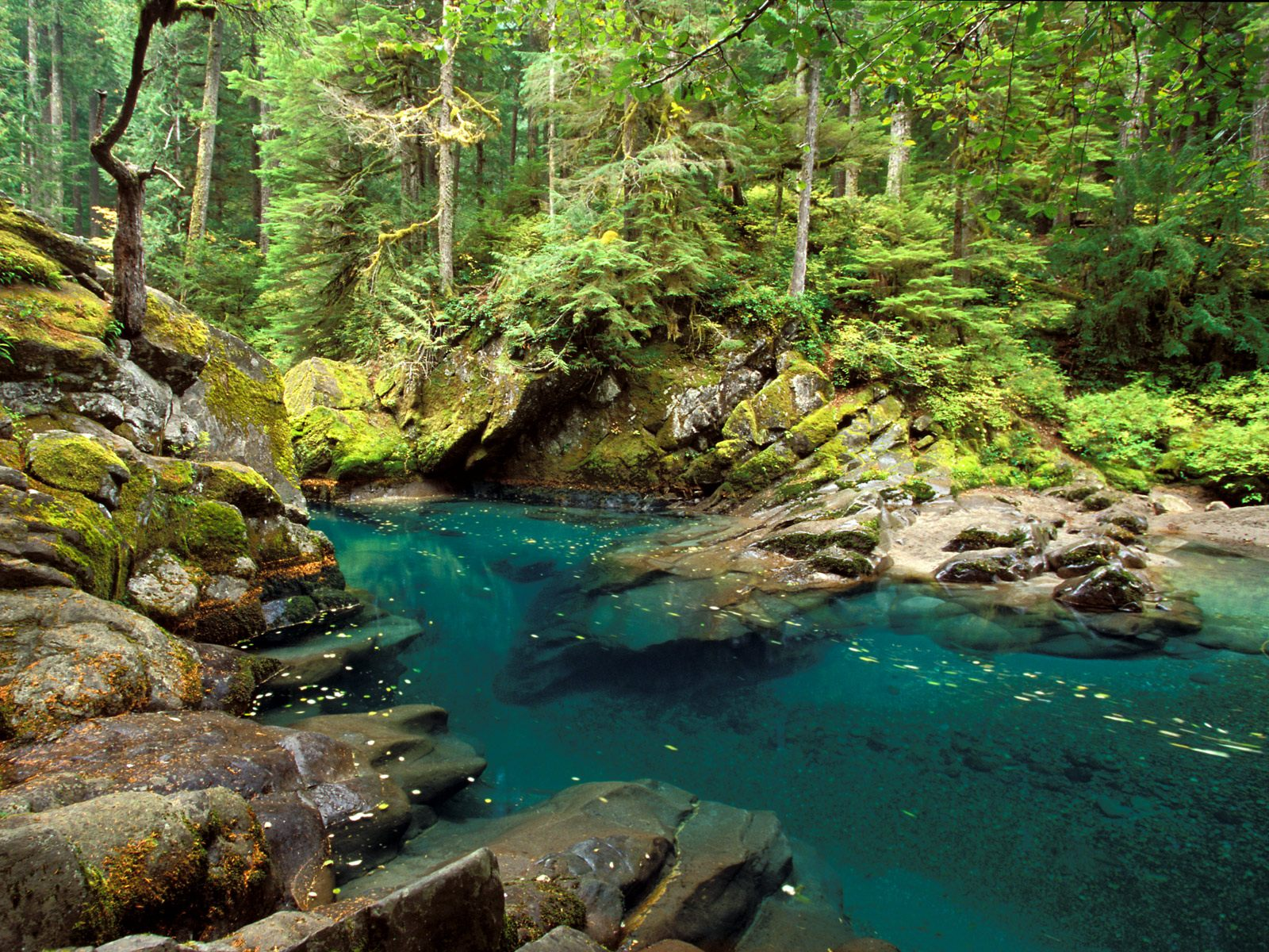 forest rivers images desktop widescreen free download