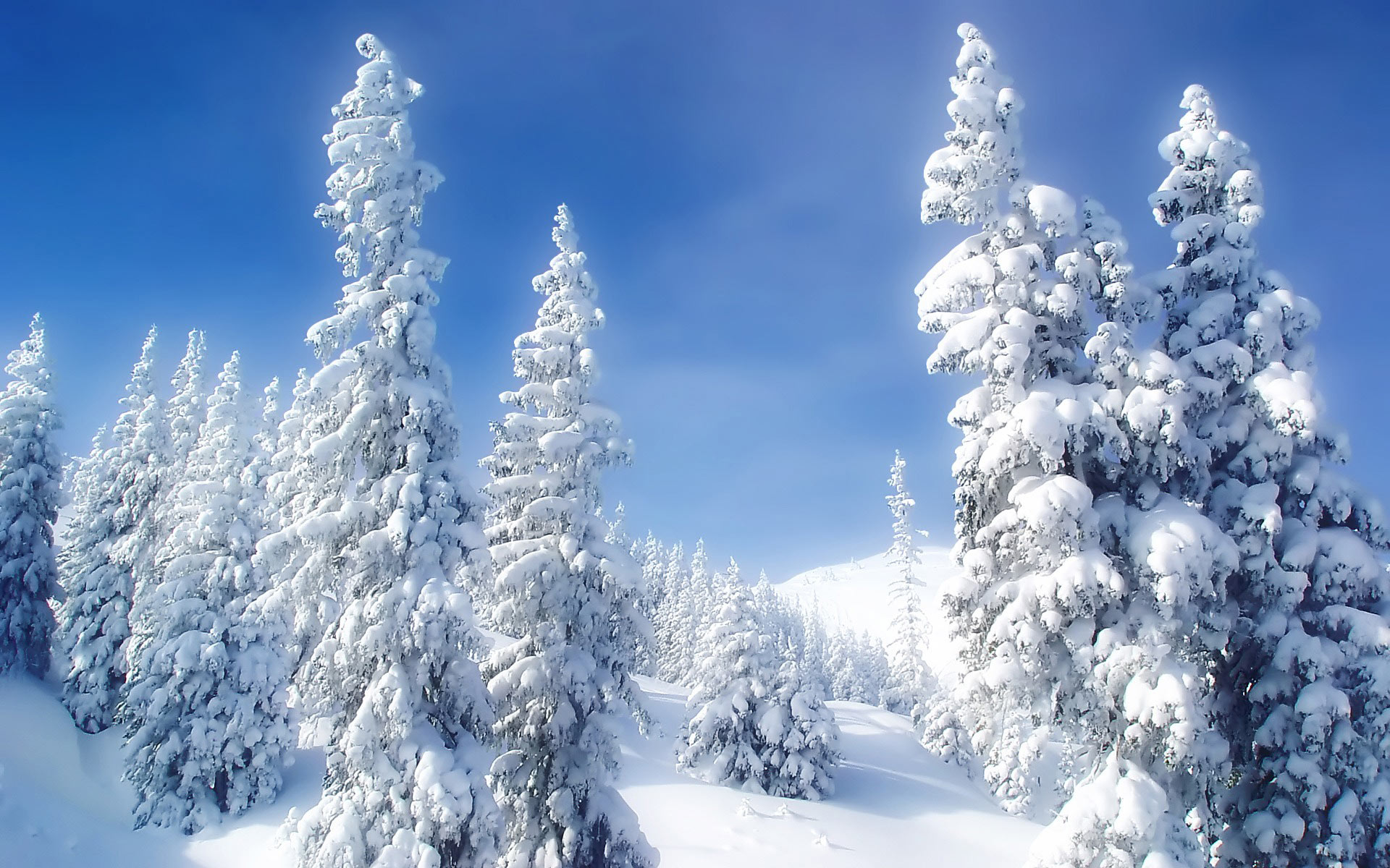 Mountain Snow Forest Desktop Wallpaper Images Free Download