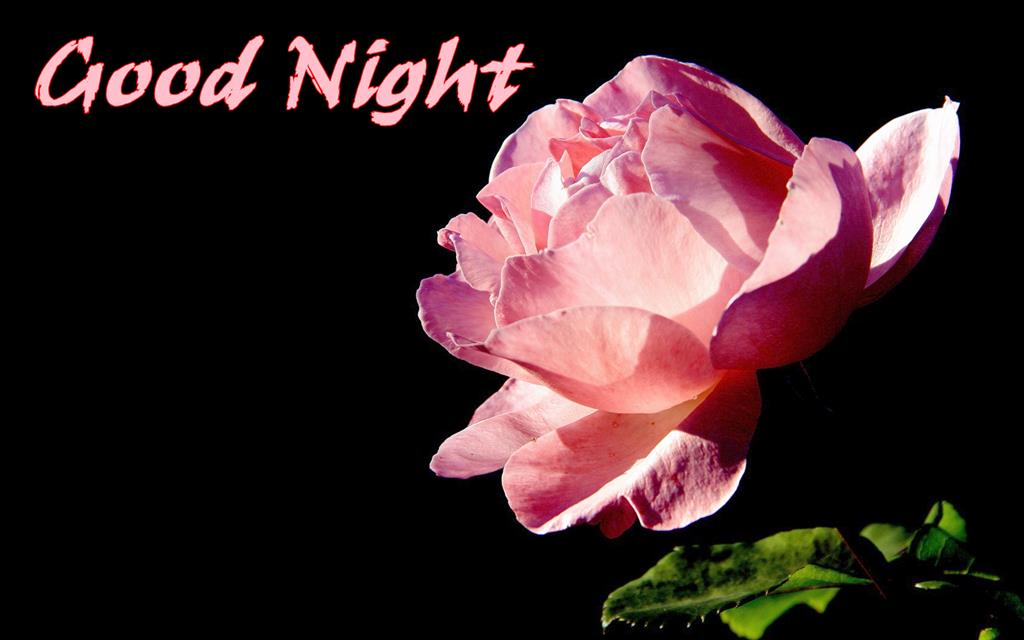 Good Night Messages With Rose For Love Imagea