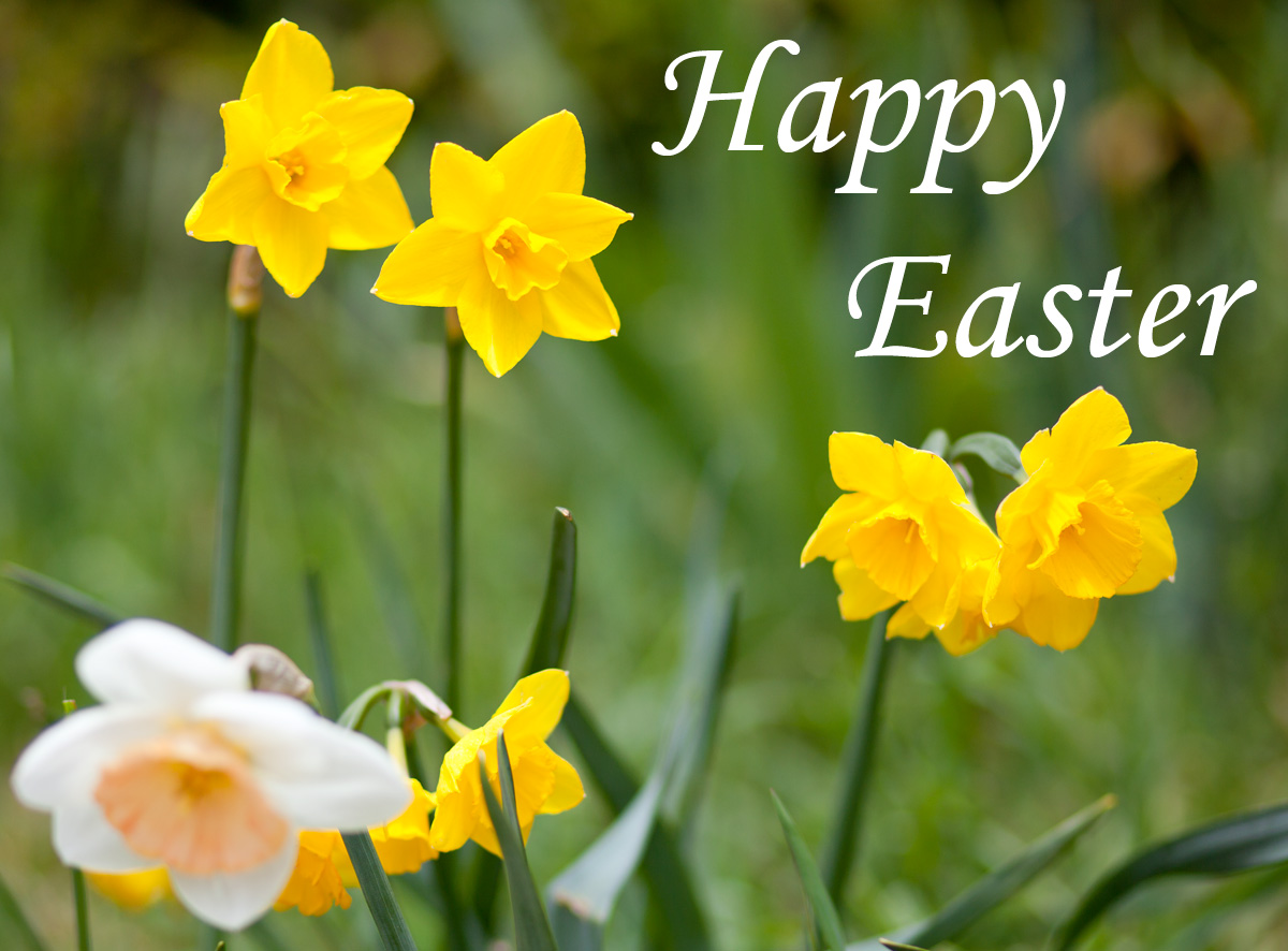 free beautiful happy easter day greeting images