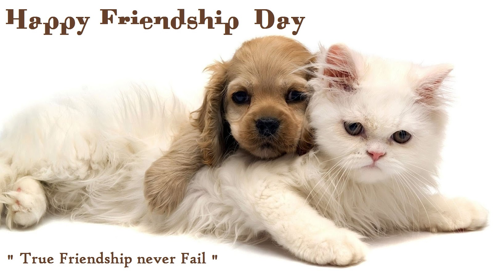 hd new happy freindship day posters facebook photos download