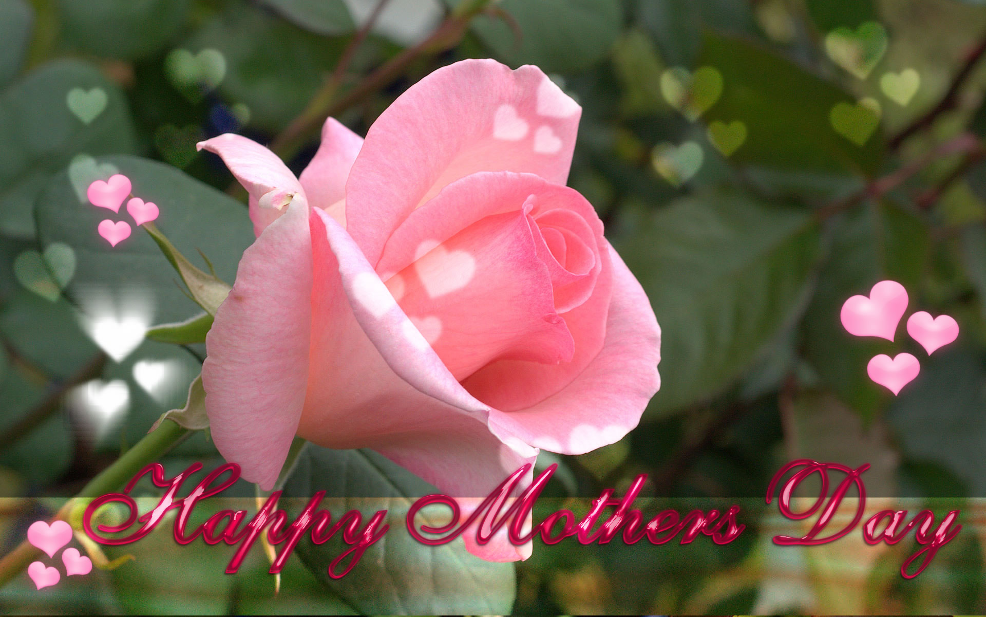happy mothers day with pink rose cute greetings download