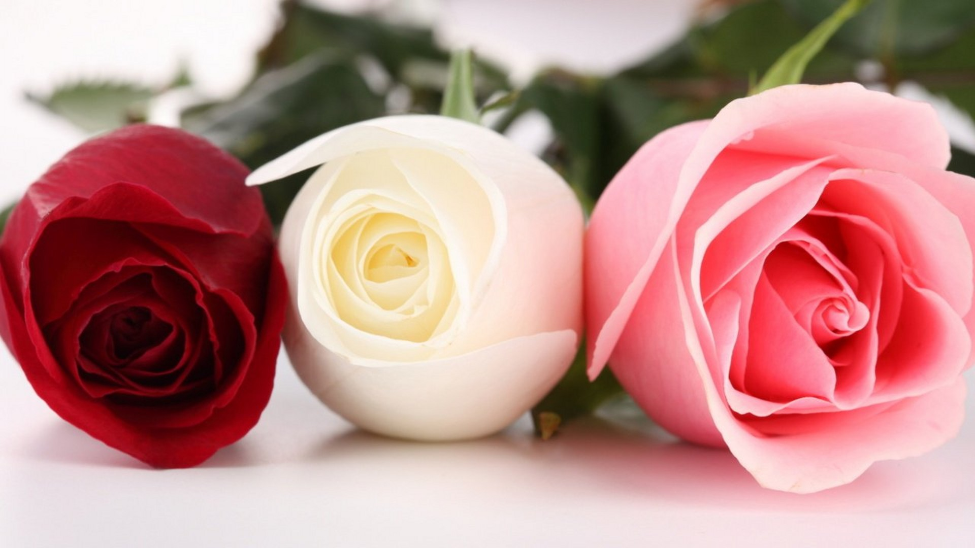 3roses flower beautiful hd views images photos download