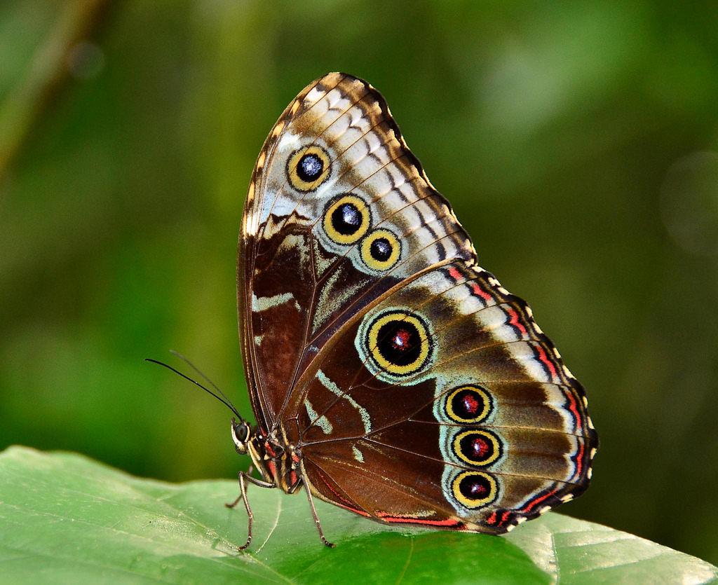 amazing butterfly image hd wallpapers free download