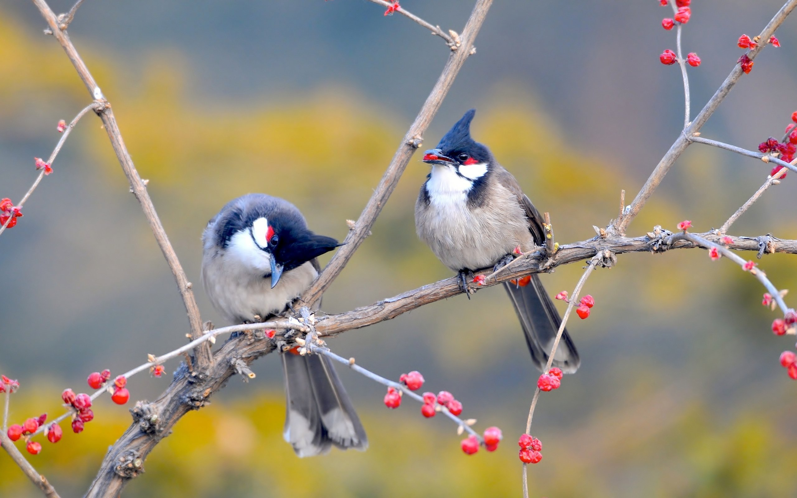 birds on tree hd photo background wallpaper photos